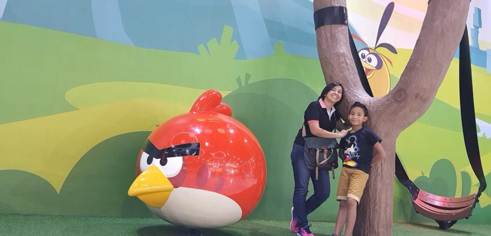 angry birds johor bahru malaysia jangan menyerah